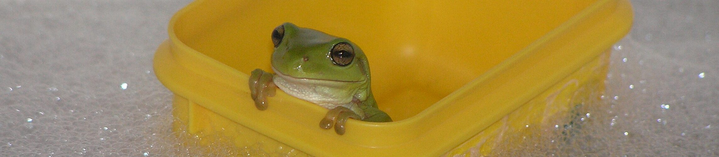 Frog in a boat in a bath