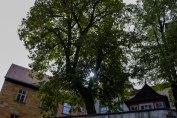 Bamberg 5 - Copy - Copy