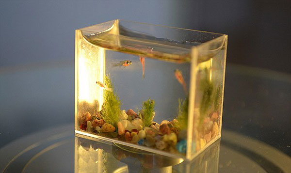 The Worlds Smallest Fish Tank  DJ Storms Blog