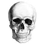 skull_illustration_by_yungtyrant