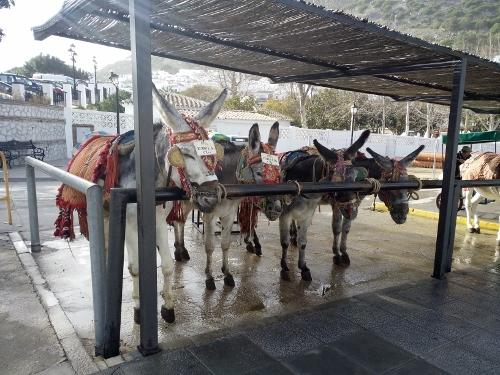 Donkey taxi station