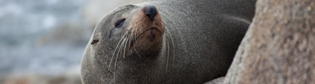 cropped-seal-narooma-2-c2a9c2a0danielle-ryan-septaug-2014.jpg