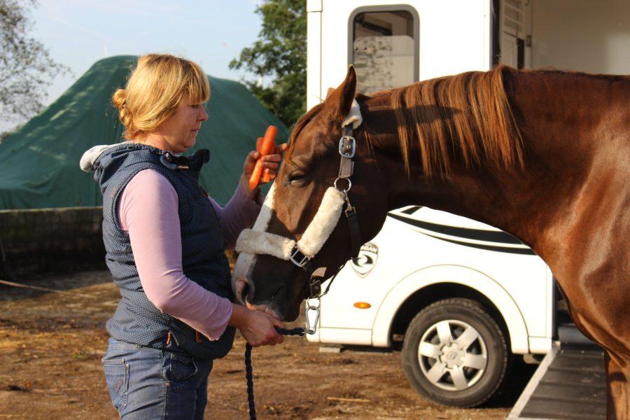Vermittlung von Pferden