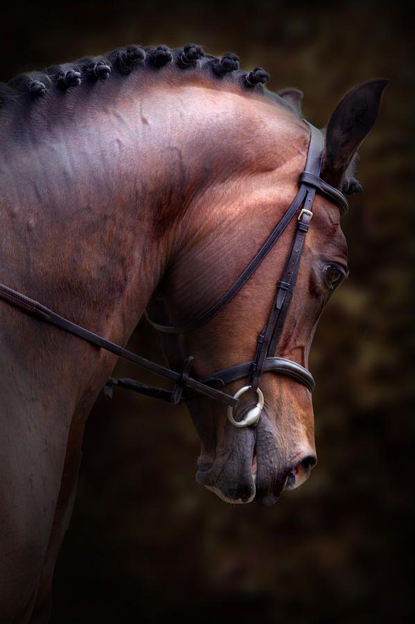 Lynne Davies Art Dressage Horse