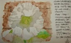 W16 7 31 PENTALIC MINERVA'S HOLLYHOCK 01