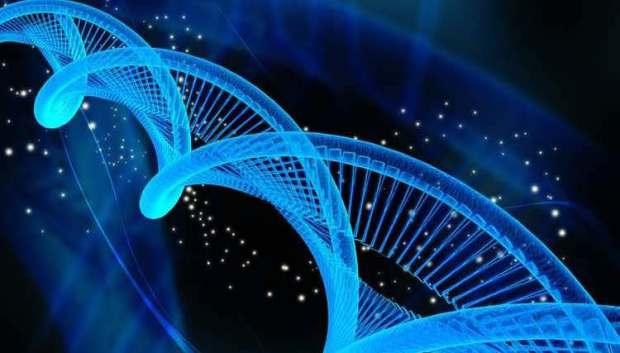 epigenetics ancestors dk brainard diana quinn nd