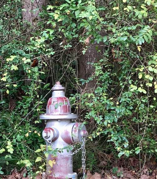 painted fire hydrant woods