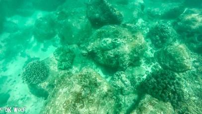 Sarcophyton sp. and Pocillopora sp.