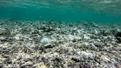 Dead coral rubble towards the western end of the main reef