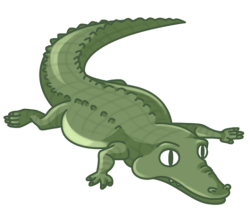 p345_Alligator