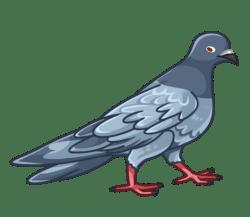 p371_pigeon