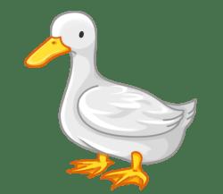 p372_Duck
