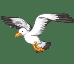 p379_seagull