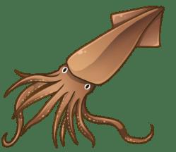 p392_squid