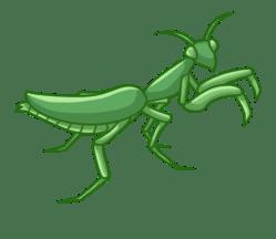 p408_mantis