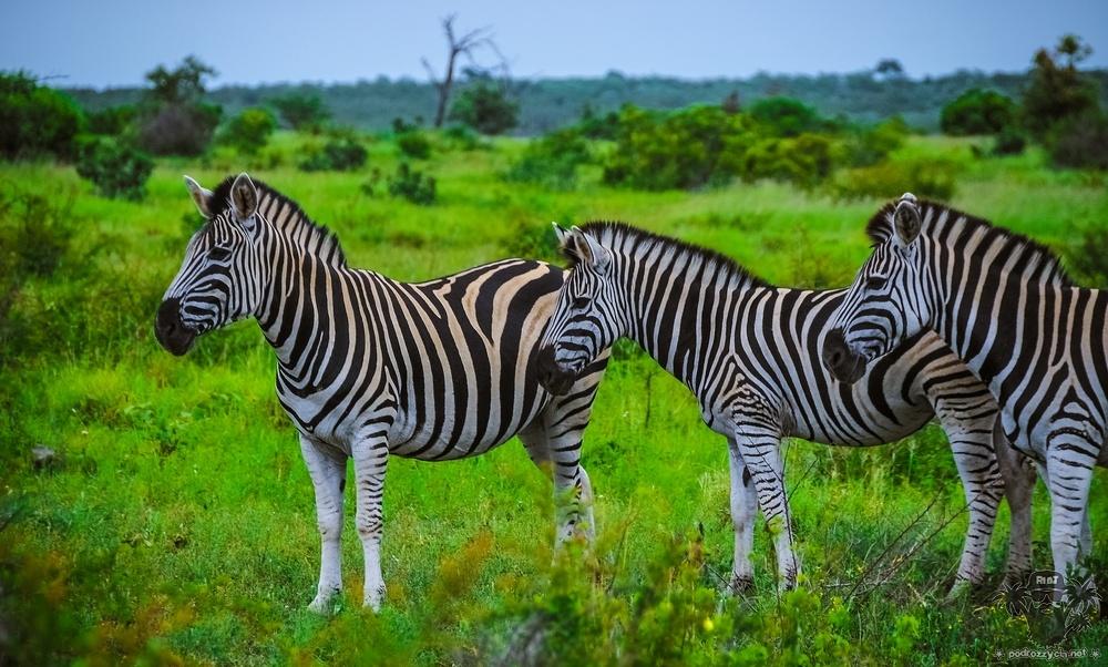 Park Krugera