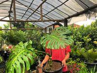 Demam Tanaman! Berikut Deretan Tanaman Termahal di Indonesia!