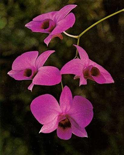 Bunga Paling Indah Sedunia : bunga, paling, indah, sedunia, Balasan, Bunga, Paling, Indah, Dunia, KASKUS