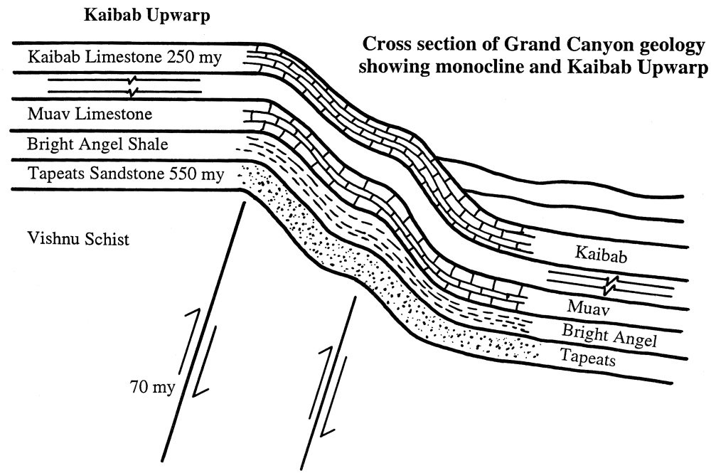 Grand Canyon strata show geologic time is imaginary