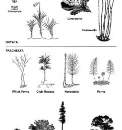plantdiagram [ 800 x 1204 Pixel ]