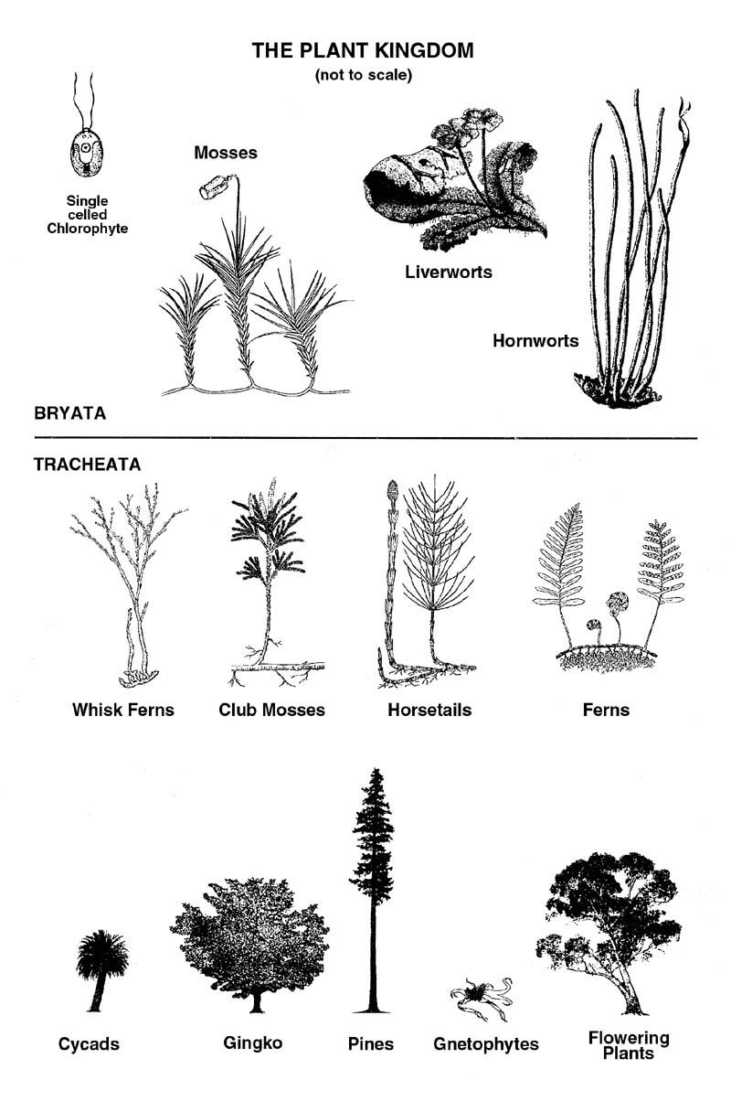 medium resolution of plantdiagram