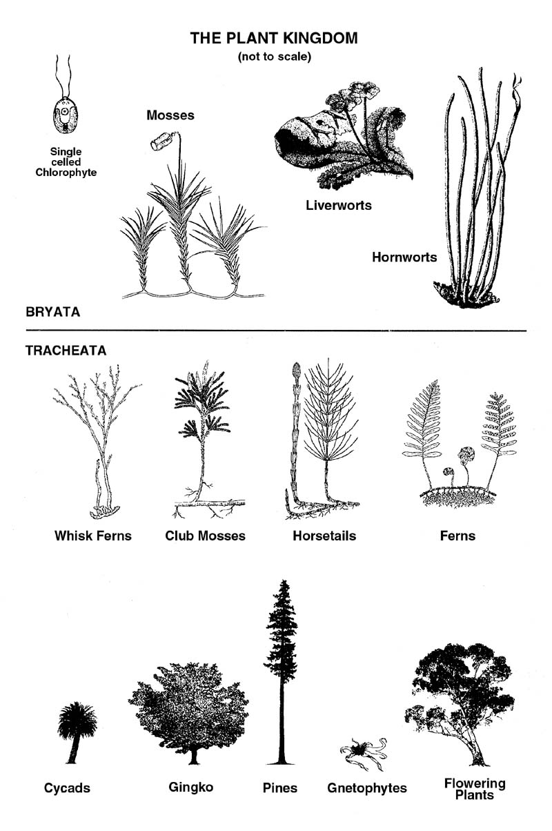 hight resolution of plantdiagram