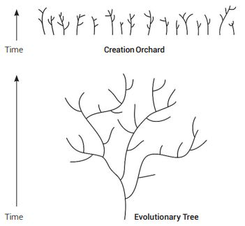 evolutionary-tree-vs-a-creation-orchard