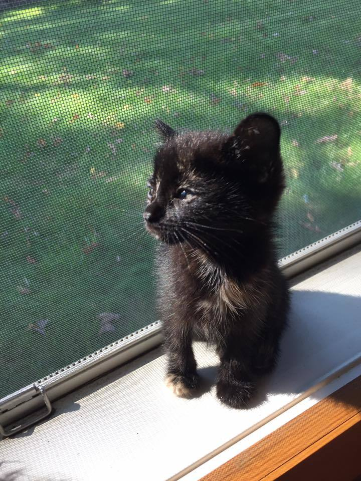 Free Kittens In Ohio : kittens, Adoption, Cat's, Cradle, Stark, County,, Middlebranch,, Petfinder