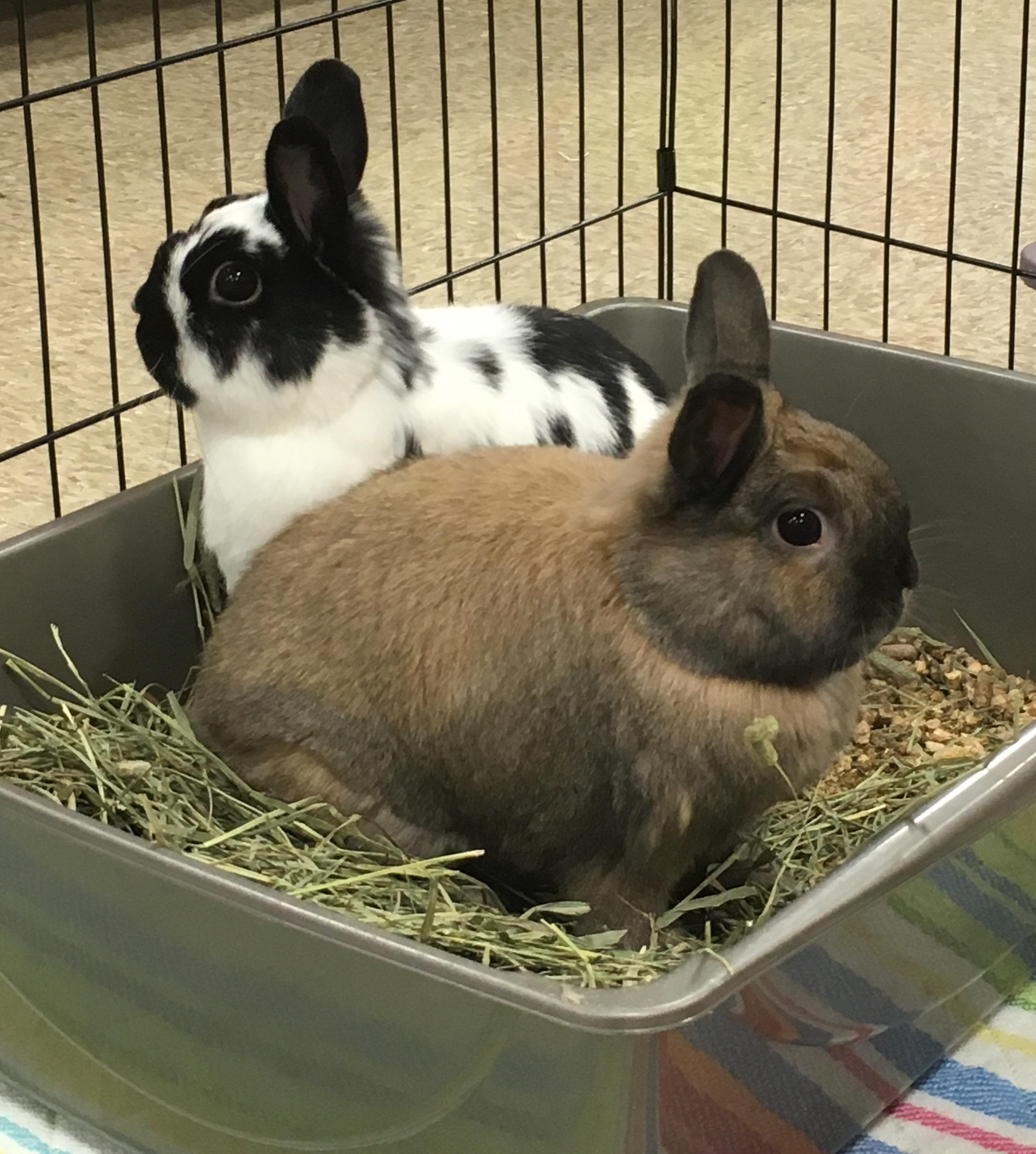 Image of: Nyc Reflectionsby Kathy Wordpresscom Rabbit For Adoption Dora Thumper Near Westerville Oh Petfinder