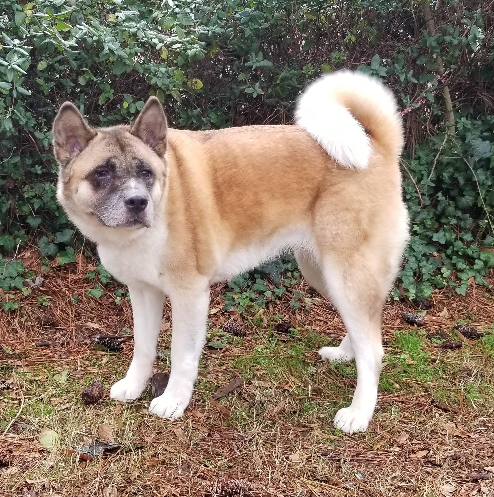dog for adoption athena