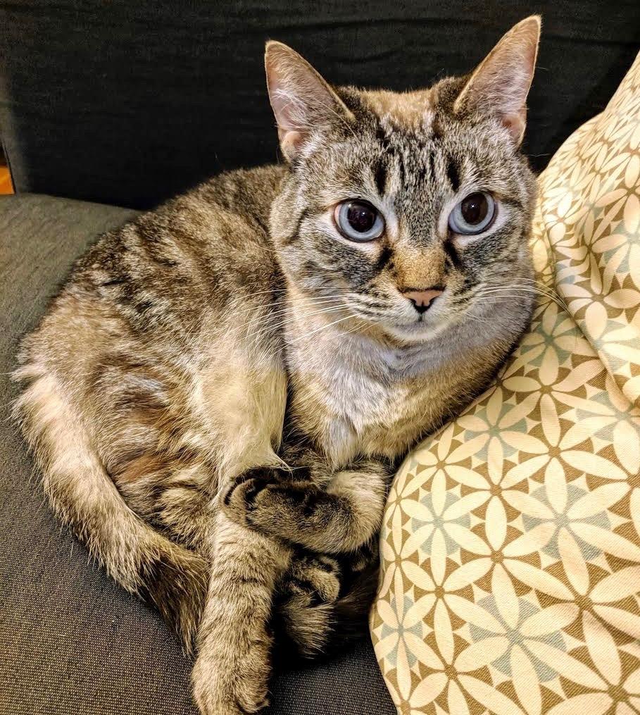 adoptable cats posh pets
