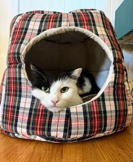Heart To Tail Travel Pet Bed : heart, travel, Francisco, Adoption:, Charlie,, Moomin,, Pancake, Francisco,, Patch