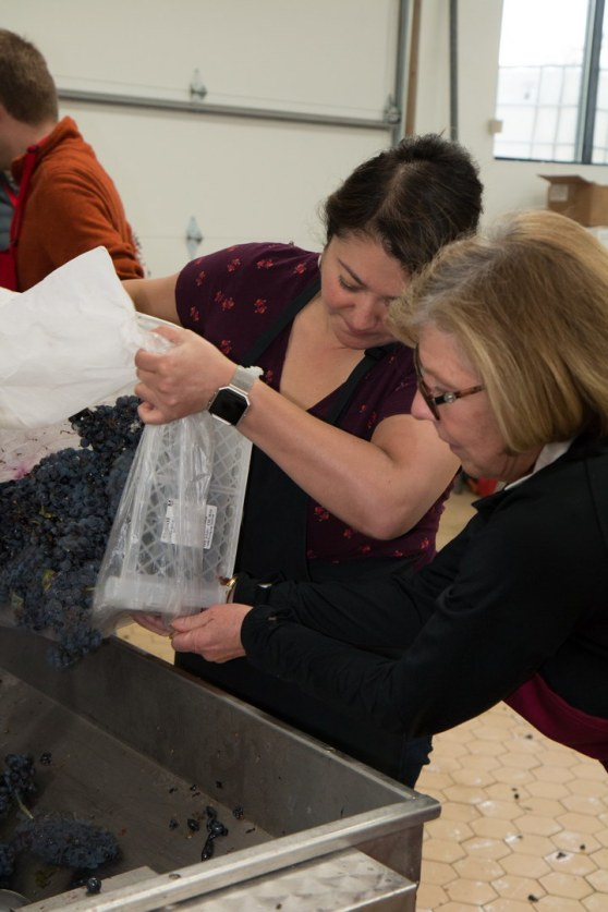 Wendy Covich & Lydia Lutzow loading grapes to be destemmed and crushed