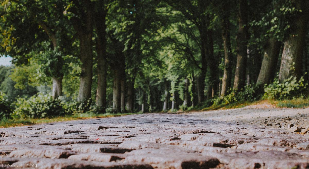 droga w lesie spacer