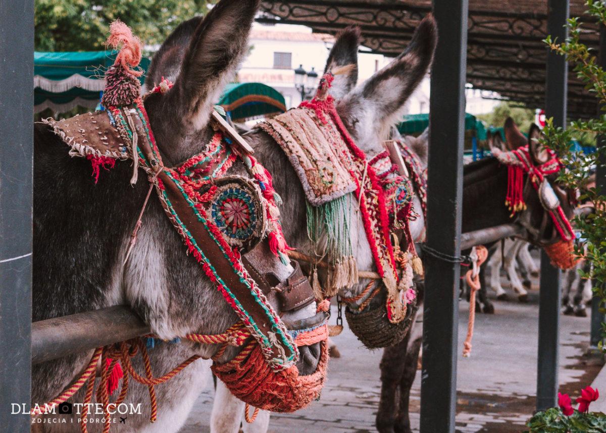 osły w Mijas roadtrip po Andaluzji