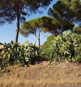 Dzień 25 kaktusy i film motywacyjny