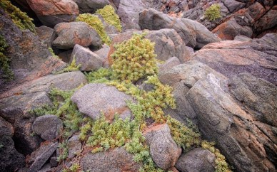 Succulents like these make a foothold between the boundary of earth and water