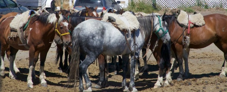 How to saddle a horse in Argentina