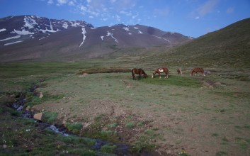 Horses in high mountain pasture