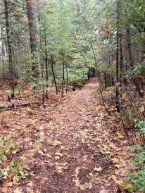 trail pic 4