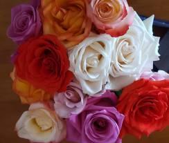 roses pic