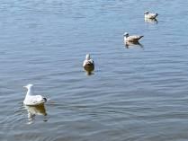 #2 Social distancing seagulls