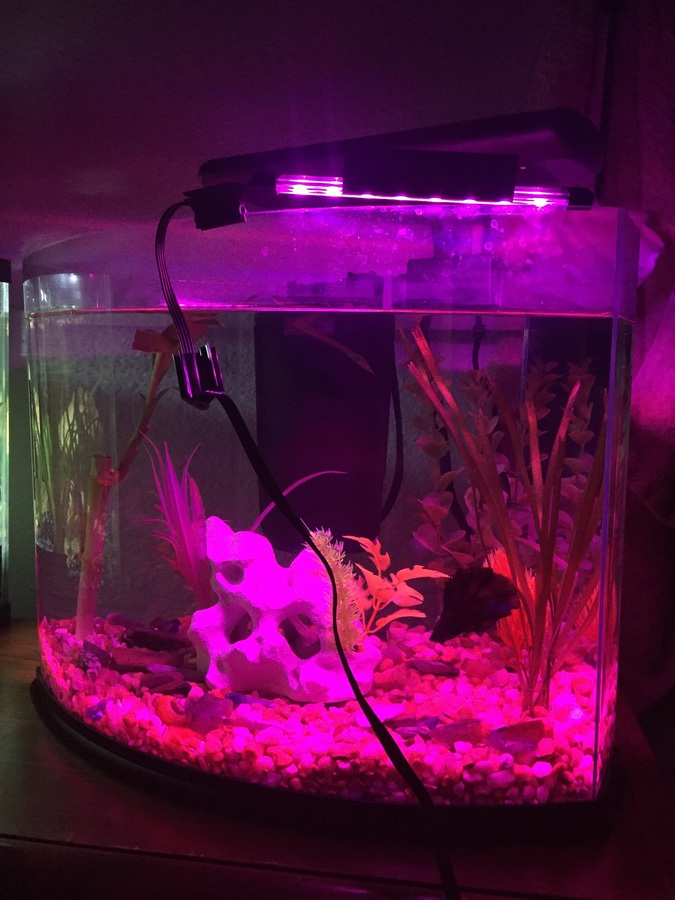 Is A Color Changing Led Light Okay For Fish  My Aquarium