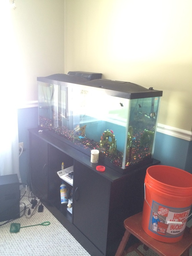 Moving A 55 Gallon Tank Any Advice? | My Aquarium Club