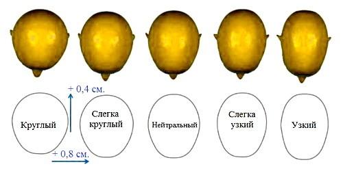 Formy cherepa