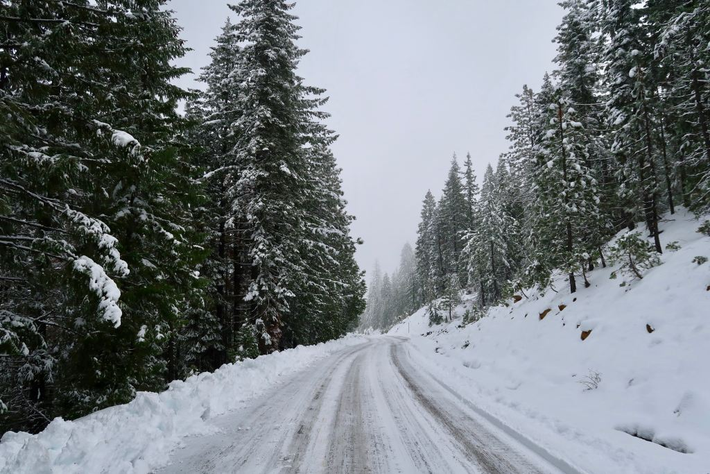 snow covered road winding between evergreen trees