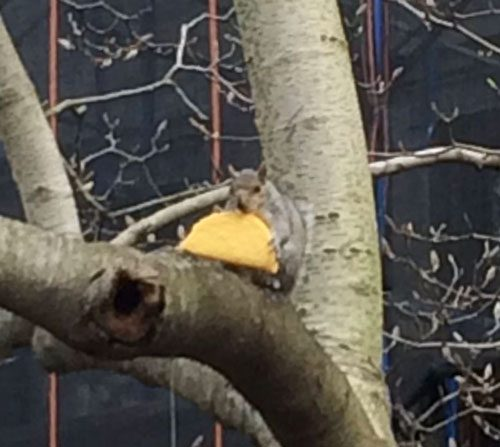Apra la posta: Ospitato da uno scoiattolo che mangia un taco in un albero