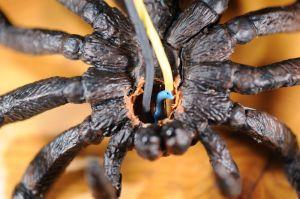 spider2_2