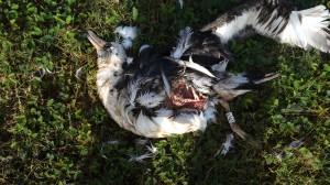 Falko Property Moli Massacre