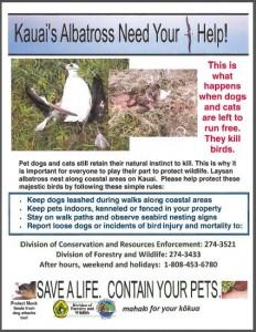 Moloaa Bay Albatross Kill Flier